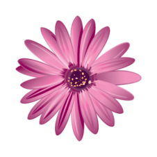 FLOWER Vector Logo images