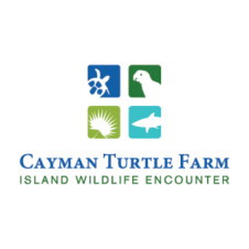 Cayman Turtle Farm Logo Vector images