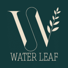 Water Leaf Logo Vector images